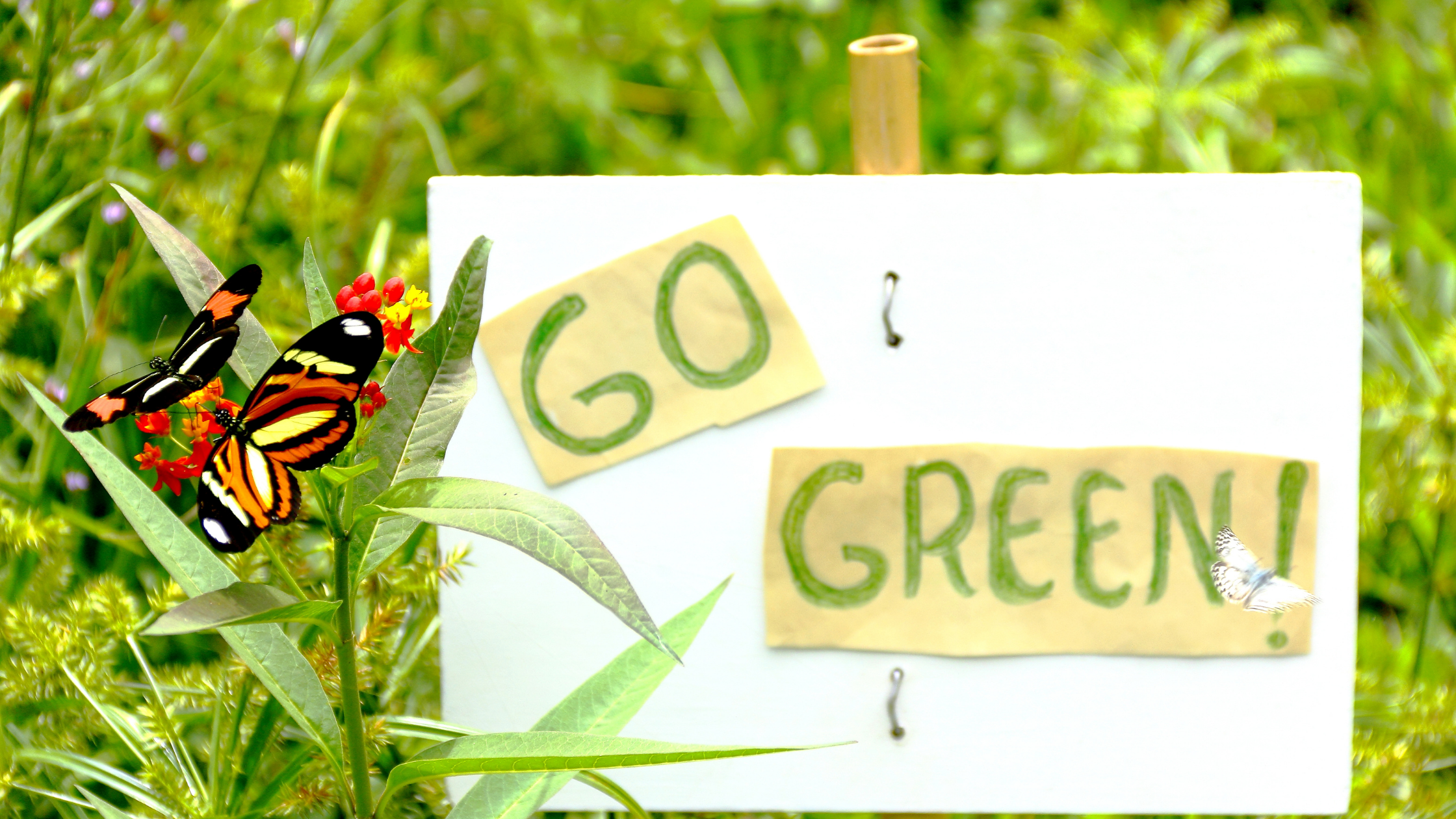 Positive ways to encourage others to go green (Guest post)